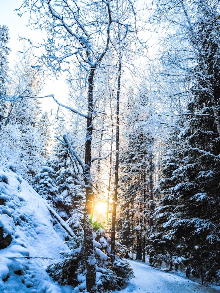 Nuuksio, luonnonpuisto, vaeltaminen, reitit, mitä on ystävyys, minkälainen on hyvä ystävä, ystävän huonot puolet, onko mulla riittävästi ystäviä, paras ystävä, miksi mulla ei ole parasta ystävää, oivalluksia