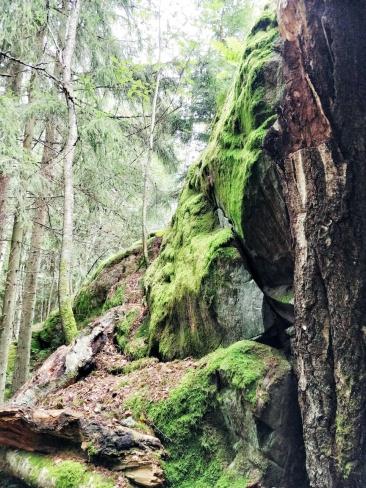 Suomen Luonnon päivä, Espoon keskuspuisto, vaellus, luontobloggaaja, bloggaaja, somevaikuttaja, Janina Michaela, metsä, luonto, vaeltaminen