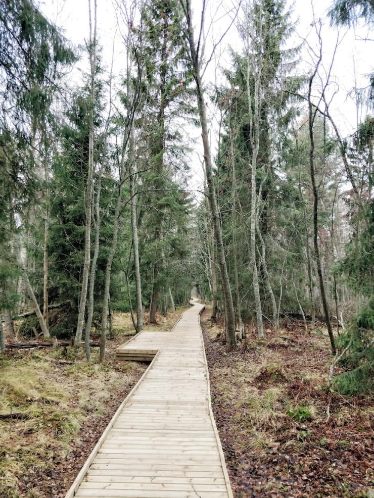 Visit Kokkola, luonto, ulkoilu, vaeltaminen, luontopolku, Villa Elba, Janina Michaela, metsäterapia, henkinen hyvinvointi, raitis ilma, Suomi, retkeily